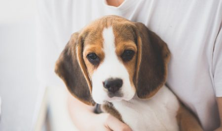 Did National Pet Food Brands Start the DCM Rumor?
