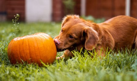 Vitamins and Your Dog – What they Need and What they Don't