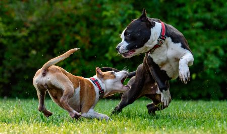 How to Combat Aggressive Behavior in Dogs
