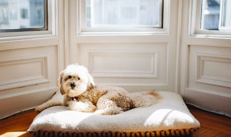 The Impact Apartment Living Could Have on Your Pup